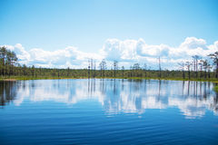 Viru Raba swamp lake. Viru Raba swamp lake in Estonia Royalty Free Stock Photography