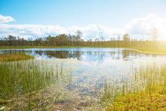 Viru Raba swamp lake. Viru Raba swamp lake in Estonia Stock Photo