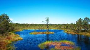 Viru Raba swamp lake. Viru Raba swamp lake in Estonia Stock Photography