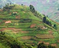 Virunga Mountains in Africa. Aerial detail around the Virunga Mountains in Uganda (Africa Stock Photo
