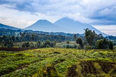 Virunga volcano national park landscape with green farmland fields in the foreground, Rwanda stock photo