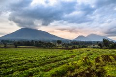 Virunga volcano national park landscape with green farmland fiel. Ds in the foreground, Rwanda Royalty Free Stock Photo