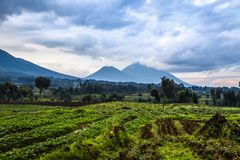 Virunga volcano national park landscape with green farmland fiel. Ds in the foreground, Rwanda Stock Photos
