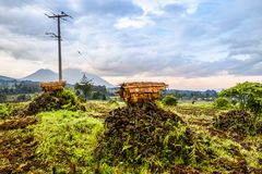 Virunga volcano national park landscape with beehives and farmla. Virunga volcano national park landscape with green farmland fields in the foreground, Rwanda Stock Images