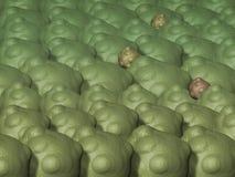 Virus and bacterium Stock Photo