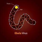 Virus de Ebola - estructura Diseño de la plantilla de Minimalistic Imágenes de archivo libres de regalías