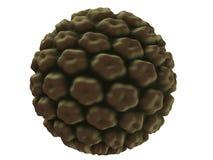 Virus de Hpv Imagen de archivo libre de regalías