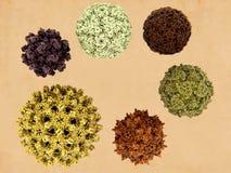 6 virus de humano-infección libre illustration