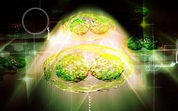 Virus de sífilis Fotos de archivo libres de regalías