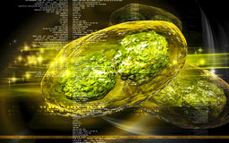 Virus de sífilis Fotografía de archivo libre de regalías