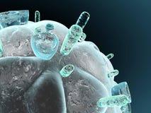 Virus di HIV Fotografia Stock Libera da Diritti
