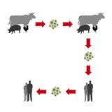 Virus diffusion from animal to men Stock Photography