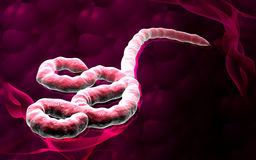 Virus Ebola Images stock