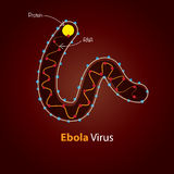 Virus Ebola - structure Conception de calibre de Minimalistic Images libres de droits