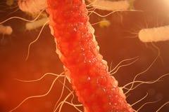 virusbakterier för illustration 3D Virus- infektion orsaka den kroniska sjukdomen, minskad immunitet Röda bakterier under Royaltyfri Illustrationer