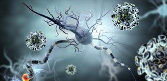 Virussen die zenuwcellen aanvallen Stock Foto's