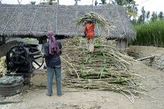 Viruta de la preparación de la azúcar de savia de palmera de la caña de azúcar y del jugo de la extracción fotos de archivo libres de regalías
