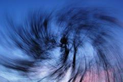 Virvel för trädfilialer Arkivfoto