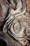 Virvelmodell på gammalt trä arkivbilder