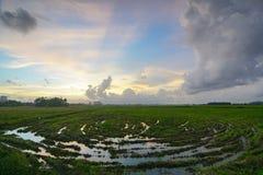 Virvla modellen på risfältfältet med den episka solstrålen Arkivbild