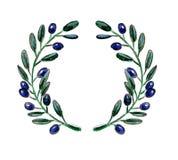 Virvlar den olivgröna filialen för vattenfärgen Vektor Illustrationer