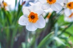 Visão borrada da flor foto de stock
