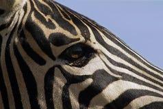 Visões de África Foto de Stock