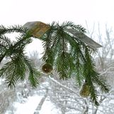 Vis-à-vis de la fenêtre, une branche est très bien, décoré pendant la nouvelle année de Noël image libre de droits