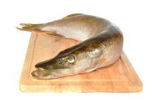 Vis een snoek op een raad Stock Afbeeldingen