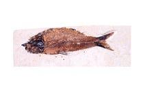 Vis fossiel Stock Afbeelding
