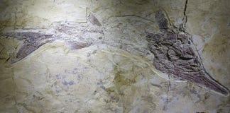 Vis fossiel Stock Afbeeldingen