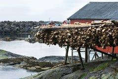 Vis industrie in Noorwegen Stock Foto's