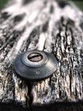 Vis rouillée en vieux bois Images libres de droits