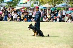 Visa att hundkapplöpningen av kriger. Royaltyfria Foton