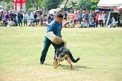 Visa att hundkapplöpningen av kriger. Fotografering för Bildbyråer