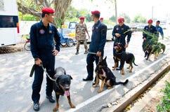 Visa att hundkapplöpningen av kriger. Arkivfoton