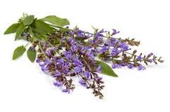 Visa blommor   Royaltyfria Foton