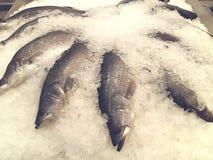 visa för ismarknaden för fisken din fransk text för avstånd Royaltyfri Bild