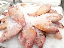 visa för ismarknaden för fisken din fransk text för avstånd Royaltyfri Fotografi
