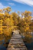 Visa från Yetty höstskogen Royaltyfria Foton