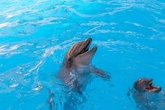visa med delfin i delfinariet Royaltyfri Bild