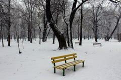 Visa på bänk Fotografering för Bildbyråer