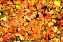 Visa växter Royaltyfria Bilder