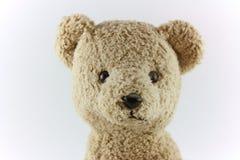Visage d'ours de nounours Photo libre de droits