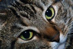 Visage d'un chat Photo stock