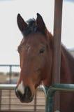 Visage d'un jeune cheval Photo stock