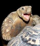 Visage d'une tortue heureuse Photos stock