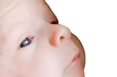 Visage de bébé d'isolement sur le blanc Photographie stock