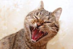 Visage de baîllement de chat Image libre de droits