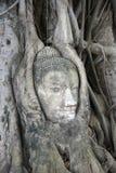 Visage de Bouddha dans des fonds d'arbre Photographie stock libre de droits